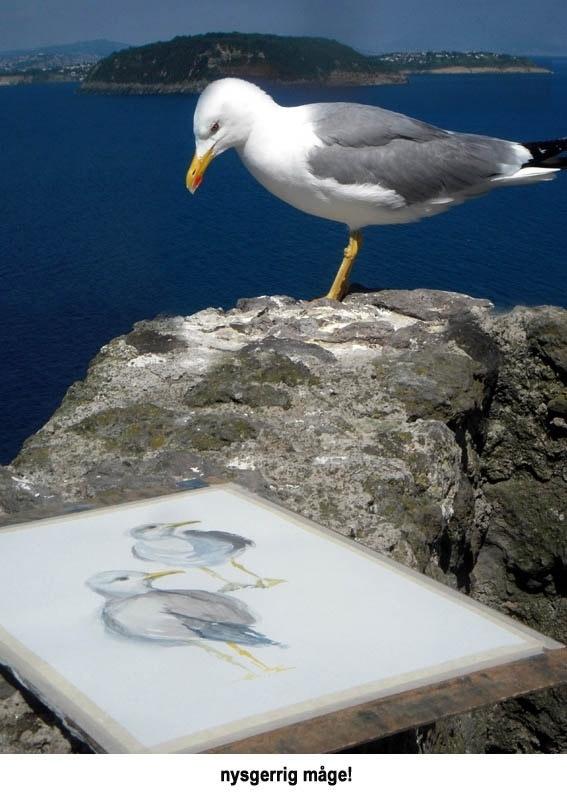 Akvarelkursus Ischia nysgerrig maage