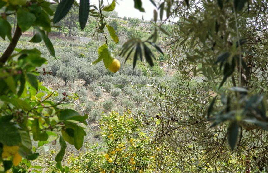 Malekursus Andalusien Kreativt Netværk (9)
