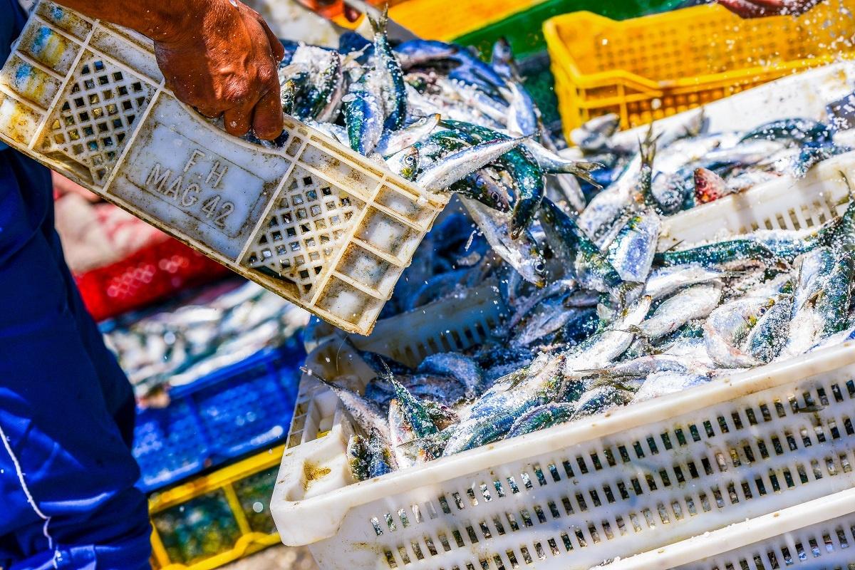 Kreativt Netvaerk Essaouira Malekursus Marokko